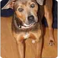 Adopt A Pet :: Angie - PENDING! - kennebunkport, ME
