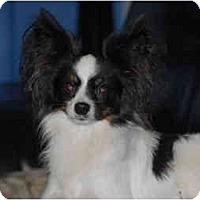 Adopt A Pet :: Landon - Ft. Myers, FL