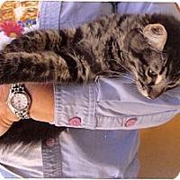 Adopt A Pet :: Quigley - Davis, CA