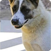 Adopt A Pet :: Sweetie - Hayward, CA
