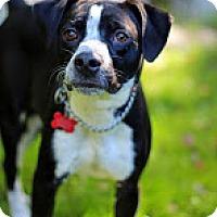 Adopt A Pet :: Llyod - Tinton Falls, NJ