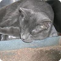 Adopt A Pet :: Marley - Caistor Centre, ON