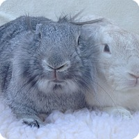 Adopt A Pet :: Fezziwig & Wopsle - Watauga, TX