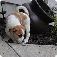Adopt A Pet :: Jitterbug - Atlanta, GA