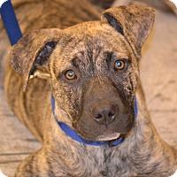Adopt A Pet :: Memphis - Albemarle, NC
