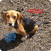 Adopt A Pet :: NORA - Ventnor City, NJ