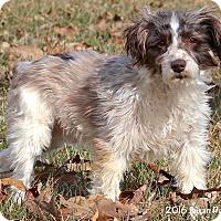 Adopt A Pet :: Odie - Bedford, VA