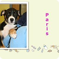 Adopt A Pet :: Paris - Tampa, FL