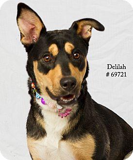 Shepherd (Unknown Type)/Collie Mix Dog for adoption in Baton Rouge, Louisiana - Delilah