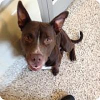 Adopt A Pet :: Homer - Aiken, SC