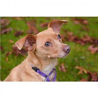 Whippet Dog Rescue Oregon