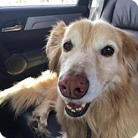 Adopt A Pet :: Zeke #0576 - Fort Worth, TX