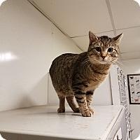 Adopt A Pet :: Oliver - Indianola, IA