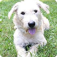 Adopt A Pet :: China - Mocksville, NC