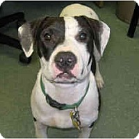 Adopt A Pet :: Macy - Scottsdale, AZ
