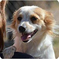 Adopt A Pet :: Trish - New Boston, NH