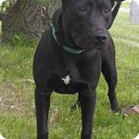 Adopt A Pet :: Gabby - Gary, IN