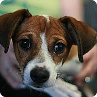Adopt A Pet :: Bamboo - Canoga Park, CA