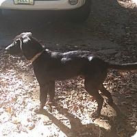 Adopt A Pet :: Herbie - Charlestown, RI