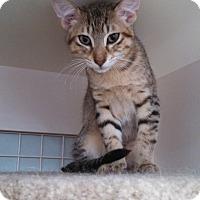 Adopt A Pet :: Chip - St. Louis, MO