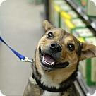 Adopt A Pet :: Beeper
