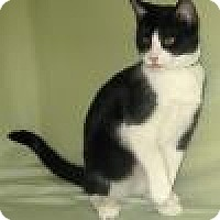 Adopt A Pet :: Bandit - Powell, OH