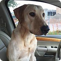 Adopt A Pet :: Ben - Sarasota, FL