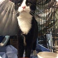 Adopt A Pet :: Zach - Trevose, PA