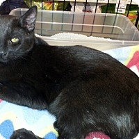 Adopt A Pet :: Gimmy - Gilbert, AZ