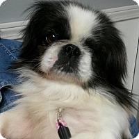 Adopt A Pet :: Didi West - Urbana, OH