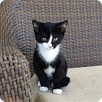 Adopt A Pet :: Sylvester - Gadsden, AL