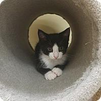Adopt A Pet :: RayRay - Balto, MD