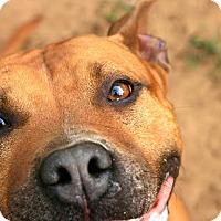 Adopt A Pet :: Joffy - Tallahassee, FL