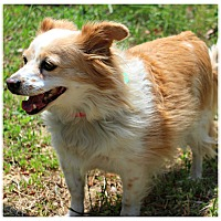 Adopt A Pet :: Muffin - Forked River, NJ