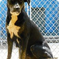 Adopt A Pet :: Trina - Redding, CA
