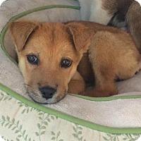 Adopt A Pet :: Jody - Los Angeles, CA