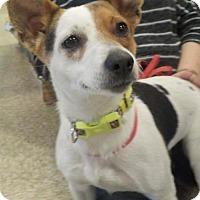 Adopt A Pet :: DELILAH - Longview, WA