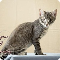 Domestic Shorthair Cat for adoption in Crescent, Oklahoma - Arial