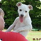 Adopt A Pet :: Boone (8 lb) Video!
