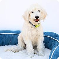 Adopt A Pet :: Einstein - Auburn, CA