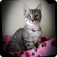 Adopt A Pet :: Puddleduck - Richmond, VA