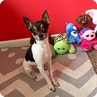 Adopt A Pet :: Morticia - Mission, KS