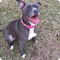 Adopt A Pet :: Eliza Jane - St. Francisville, LA