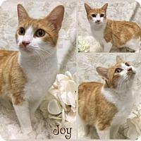 Adopt A Pet :: Joy - Joliet, IL