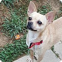 Adopt A Pet :: Oscar - Morganville, NJ