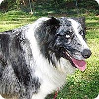 Adopt A Pet :: Fezzik - Savannah, GA