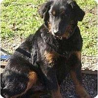 Adopt A Pet :: Fluffy - Glenpool, OK
