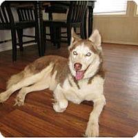 Adopt A Pet :: Aurora - Jacksonville, NC