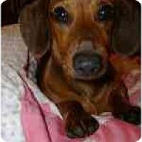 Adopt A Pet :: SAM - Portland, OR