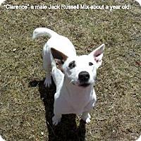 Adopt A Pet :: Clarence - Gadsden, AL